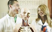 How to Study the Bones in the Human Skeleton