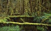 List of Tropical Rainforest Plants