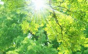 What Is Reduced & Oxidized in Photosynthesis?