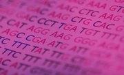 How Does DNA Translation Work?