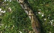Poisonous & Nonpoisonous Snakes