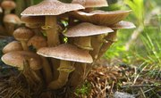 What Do Fungi Contribute to the Ecosystem?