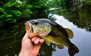 The Best Bass Fishing in Washington State