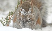 How Does a Squirrel Survive in the Winter?