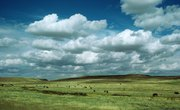 Weather of the Grassland Ecosystem