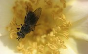 Pollination Activities for Kids