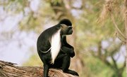 How Is a Monkey Adapted to Its Environment?