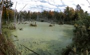 How Does Eutrophication Affect pH?