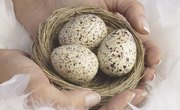 What Time of Year Do Wild Birds Lay Eggs?