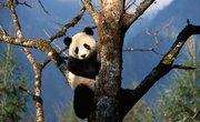 How to Make a Model of a Panda's Habitat