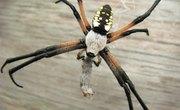Common North Dakota Spiders