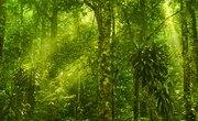 Abiotic Factors of a Rain Forest
