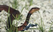 Reptiles that Give Live Birth