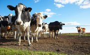 Can You Deduct Electric Bills for Farm Expenses?