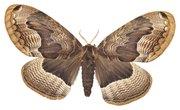 How Do Moths Mate?