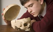 Easy Ways to Remember the Structures of the Skull