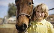 Science Fair Project Ideas: Equine