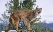Wild Animals Found in Virginia