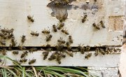 How to Clean Bee Hives