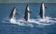How Does SeaWorld Transport Animals?