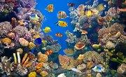 Definition of an Aquatic Ecosystem