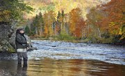When to Fish for Salmon in Michigan?