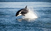 How Do Whales Protect Themselves?