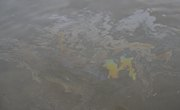 The Effects of Oil Pollution on Aquatic Ecosystems