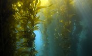 Facts About Seaweed