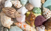 How Are Seashells Formed?