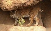 Animals in the Desert Ecosystem