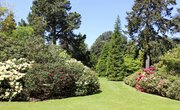 Differences Between Conifers & Flowering Plants