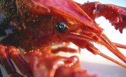 How to Fish for Crayfish & Crawdads in Oregon