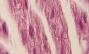 What Kind of Energy Makes Muscle Cells Contract?
