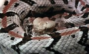 Types of Snakes in Delaware
