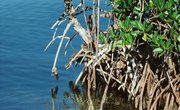 The Role of Decomposers in a Mangrove Ecosystem
