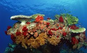 What Is the Difference Between LPS and SPS Corals?