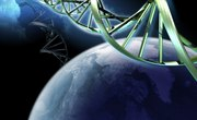What Maintains Genetic Continuity?