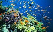 Marine Ecosystem Classification