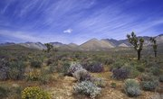 Soil Characteristics of Deserts