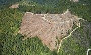 How Does Deforestation Affect the Landscape?