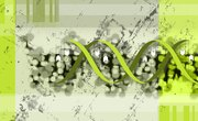 3 Kinds of Mutation That Can Occur in the DNA Molecule