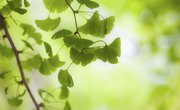 Why Is Photosynthesis Important to Humans?