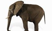 How to Create an Elephant Tessellation