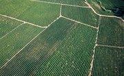 What Is a Farm Settlement Scheme?