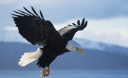 The Pros & Cons of the Endangered Species Act
