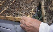 How to Strain and Store Honey from a Beehive