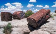 How to Cut Petrified Wood Into Slices