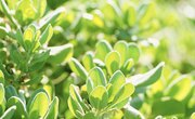 What Two Factors Influence a Region's Photosynthetic Productivity?