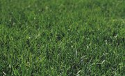 Pros & Cons of Herbicides